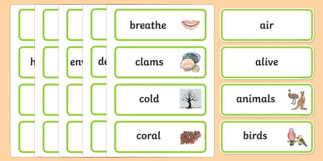 Staying Alive Word Wall Display Cards - australia, Australian Curriculum, Staying Alive, science, kindergarten, word wall, display