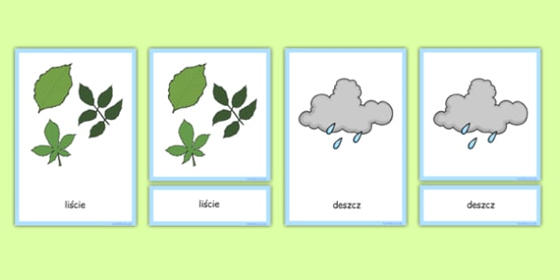 Karty ze słownictwem Rośliny i wzrost Drzewa po polsku
