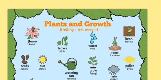 Plants and Growth Topic Word Mat Polish Translation - EAL, translated, bilingual, grow, science, nature