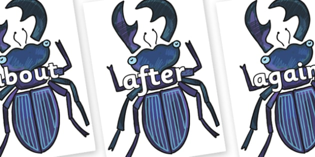 KS1 Keywords on Stag Beetle to Support Teaching on The Bad Tempered Ladybird - KS1, CLL, Communication language and literacy, Display, Key words, high frequency words, foundation stage literacy, DfES Letters and Sounds, Letters and Sounds, spelling