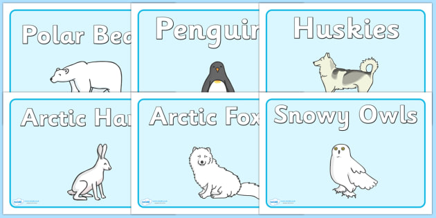 Polar Animals Group Signs - Polar Regions, polar region, region, polar, animals, animal, group signs, group labels, group table signs, table sign, teaching groups, class group, class groups, table label, ice, North Pole, South Pole, Arctic, Antarctic