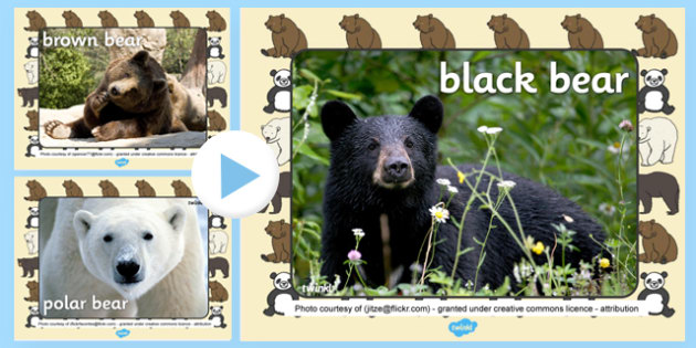 Bears Photo PowerPoint - bears, photo powerpoint, bears photos, powerpoint, bears powerpoint, bears images, display images, image powerpoint, animals