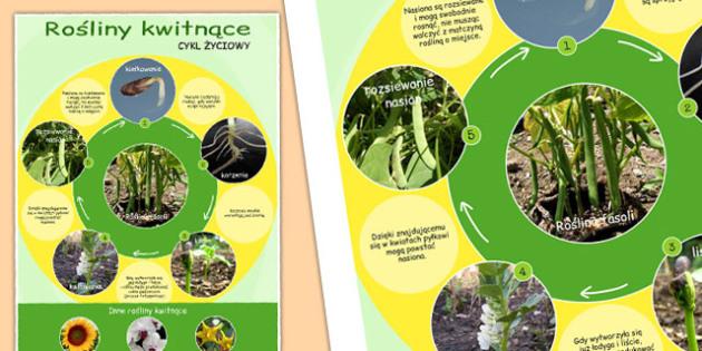 Plakat Cykl życia roślin kwitnących po polsku - przyroda