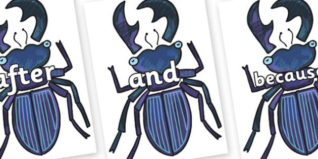 Connectives on Stag Beetle to Support Teaching on The Bad Tempered Ladybird - Connectives, VCOP, connective resources, connectives display words, connective displays