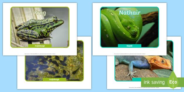 Irish Reptiles and Amphibians Display Photos Gaeilge - roi, irish, gaeilge, vocabulary, display photos, reptiles, amphibians
