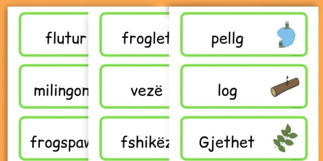 Life Cycle Word Cards - life cycles, lifecycle, visual aid, words - Albanian