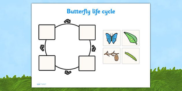 EYFS Butterfly Life Cycle Cut and Stick Activity - life cycles, early years, minibeasts