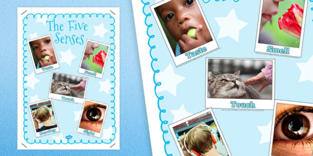 The 5 Senses Poster - sense, smell, touch, hear, see, taste