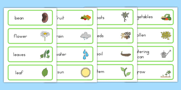 Growth Topic Word Cards - Australia, Growth, Cards, Growing