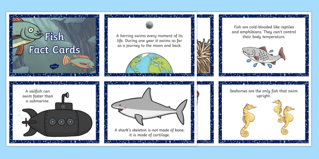 Fish Fact Cards - fish, fact cards, facts, cards, fact, fishes