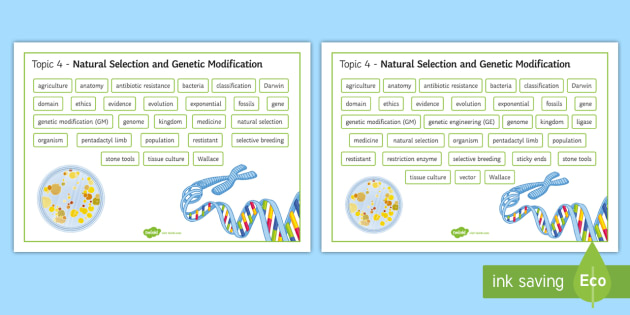Edexcel Biology Natural Selection and Genetic Modification Differentiated Word Mat - Word Mat, edexcel, gcse, genetics, gene, genetic modification, genetic engineering, natural selectio