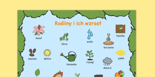 Plansza ze słownictwem Rośliny i ich wzrost po polsku