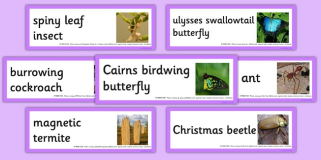 Australian Insects Word Cards - australia, animals, insects, word cards