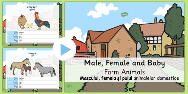 Male/Female Farm Animals and Their Young Names PowerPoint Romanian Translation - romanian, farm powerpoint, on the farm, male and female animals, animals and their young, farm animals