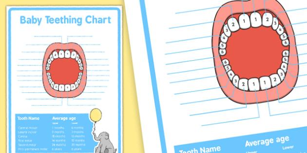 Baby Teething Chart - Baby, teeth, teething, baby teeth, chart, new parents