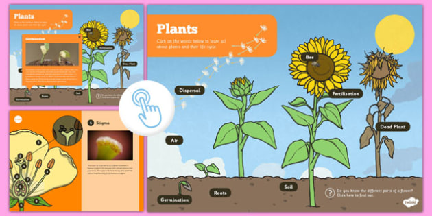 Year 3 Interactive Science PDF Plants - year 3, interactive, science, pdf, plants, growing, science, ks2
