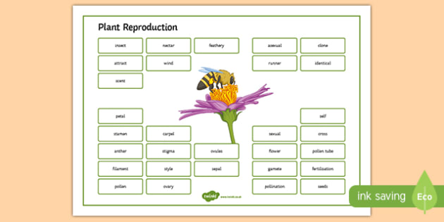 Plant Reproduction Word Mat