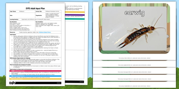 Minibeast Movement Activity EYFS Adult Input Plan and Resource Pack - insects