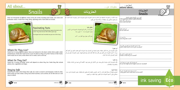 Snail Reading Comprehension Pack Arabic/English - Snail Reading Comprehension - snail, reading, comprehension, comprehesion, comprehnsion, reading com