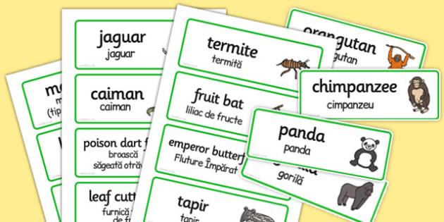 Rainforest Explorer Role Play Word Cards Romanian Translation