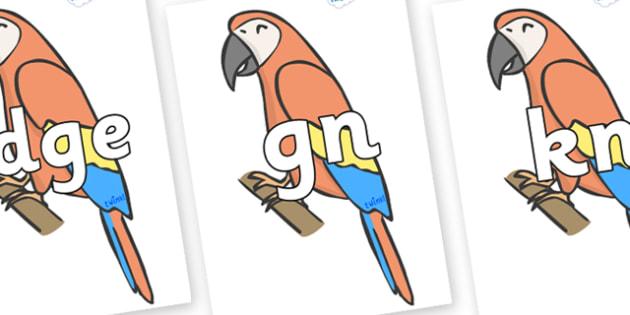 Silent Letters on Parrots - Silent Letters, silent letter, letter blend, consonant, consonants, digraph, trigraph, A-Z letters, literacy, alphabet, letters, alternative sounds