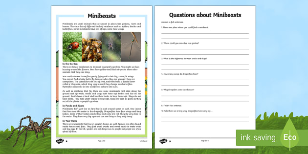 Minibeasts Differentiated Reading Comprehension Activity