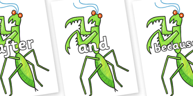 Connectives on Praying Mantis to Support Teaching on The Bad Tempered Ladybird - Connectives, VCOP, connective resources, connectives display words, connective displays
