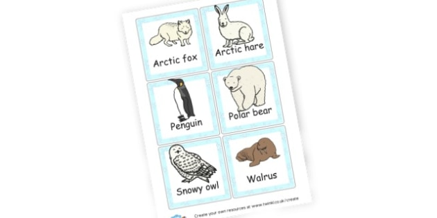Winter animals - Winter Literacy Primary Resources - The Seasons Winter Primary Re