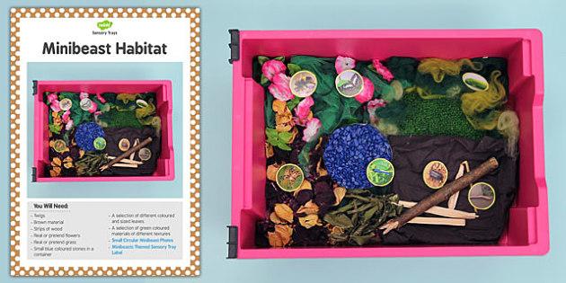 Minibeasts Sensory Tray Card - sensory tray, card, minibeasts