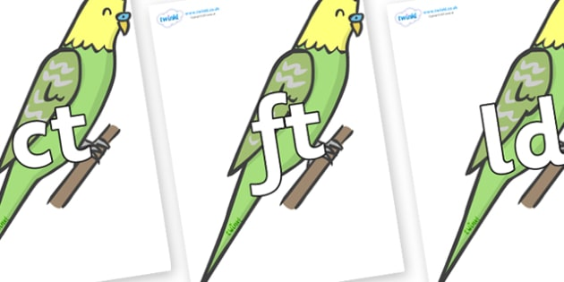 Final Letter Blends on Budgies - Final Letters, final letter, letter blend, letter blends, consonant, consonants, digraph, trigraph, literacy, alphabet, letters, foundation stage literacy