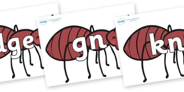 Silent Letters on Ants - Silent Letters, silent letter, letter blend, consonant, consonants, digraph, trigraph, A-Z letters, literacy, alphabet, letters, alternative sounds