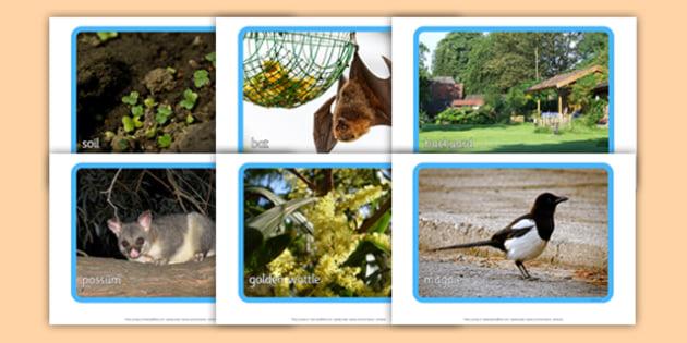 Backyard Habitat Photo Display Pack - australia, Science, Year 1, Habitats, Australian Curriculum, Backyard, Living, Living Adventure, Good to Grow, Ready Set Grow, Life on Earth, Environment, Living Things, Animals, Plants, Photos, Photographs, Disp