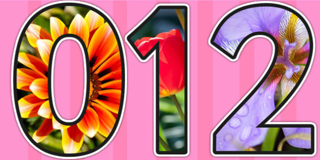 Flower Themed A4 Photo Display Numbers - flower, plant, display