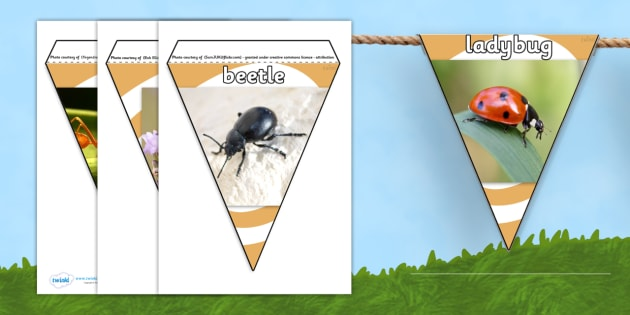 Minibeast Photo Display Bunting - minibeasts, minibeast bunting, minibeast display bunting, minibeast photo bunting, insect bunting, insect photos, bugs