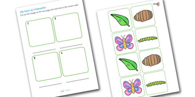 Caterpillar Life Cycle Cut and Stick Worksheet EYFS - caterpillar, life cycle, cut and stick, cut, ctick, cut out, cut-out, cutouts, worksheets, EYFS