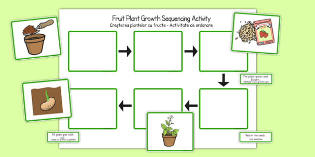 Plant Growth Sequencing Activity Romanian Translation - EAL, translated, bilingual, grow, science, nature