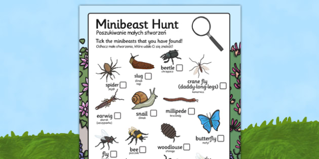 Minibeast Search Sheet Polish Translation - polish, Minibeast hunt, minibeast investigation, finding minibeasts, Minibeasts, Topic, Foundation stage, knowledge and understanding of the world, investigation, living things, snail, bee, ladybird, butter