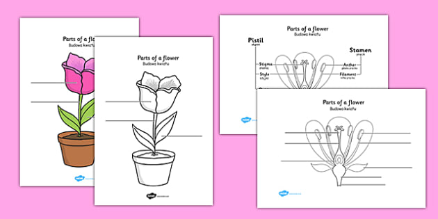 Parts of a Plant and Flower Labelling Worksheet Polish Translation - polish, parts of a flower, parts of a plant, parts of a flower labelling worksheet, flower parts worksheet
