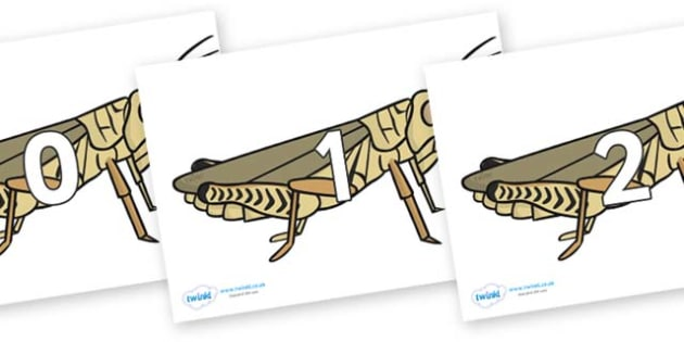 Numbers 0-50 on Grasshoppers - 0-50, foundation stage numeracy, Number recognition, Number flashcards, counting, number frieze, Display numbers, number posters