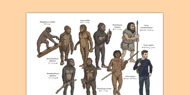 Human Evolution Physical Appearance Diagram - human, evolution, ancestor, genus, family, taxonomy, homo sapien, homo neanderthalensis