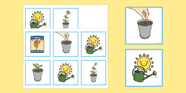 Plant Sequencing Cards - plant, sequencing, cards, sequence
