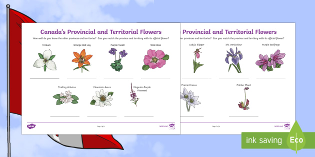 Canada's Provincial and Territorial Flowers Activity Sheet - Canadian Multiculturalism Day Resources, worksheet