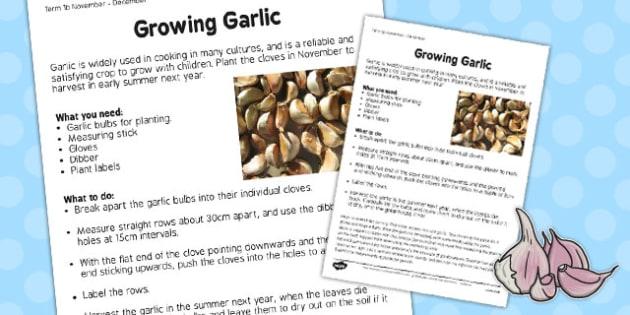 Growing Garlic Worksheet - growing, garlic, worksheet, grow