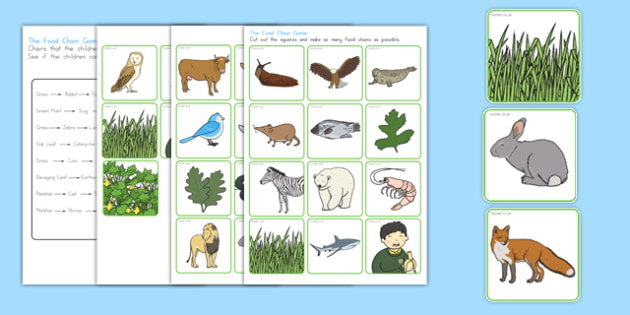 Food Chain Sorting Game - australia, food chain, sorting, game