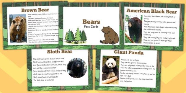 Bear Fact Cards - bear, fact cards, fact, cards, information