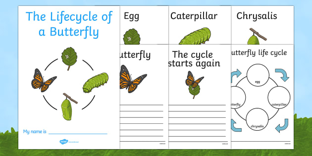 Butterfly Life Cycle Workbook (Minibeasts)- Cocoon, Caterpillar, Egg, Minibeasts, Topic, Foundation stage, knowledge and understanding of the world, investigation, living things, snail, bee, ladybird, butterfly, spider