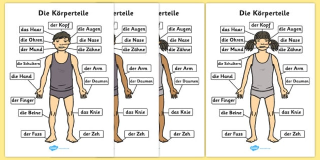 Die Körperteile A4 German - german, parts, body, a4, parts of the body, body parts