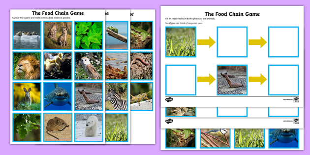 Food Chain Sorting Game - food chain, food chains, food chain sorting activity, food chain game, food chain sorting cards, building food chains, ks2 game