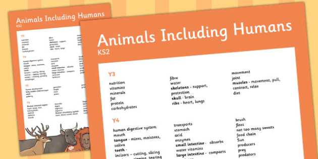 KS2 Animals Including Humans Scientific Vocab Progression Poster