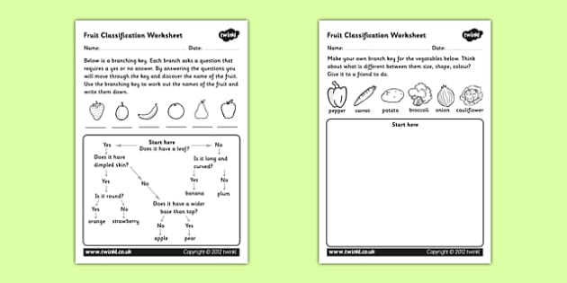 Fruit Classification Worksheet - classifying fruits, classification worksheet, flow diagram, flow chart, flow chart worksheet, fruit flow chart worksheet